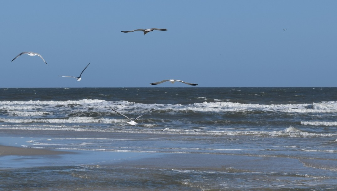 Five Flying Gulls