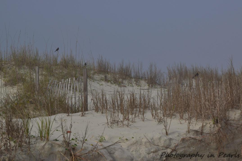 Beachscape-1