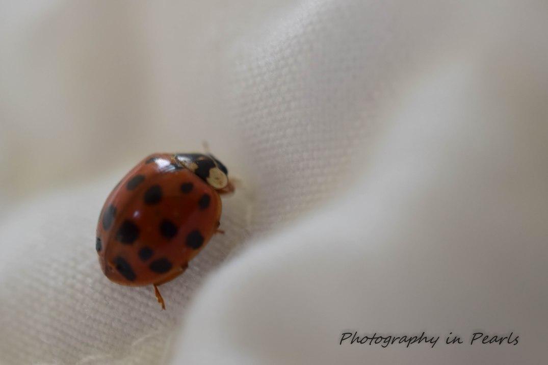 Lady Bug 5