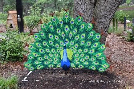 Peacock 1 68,827