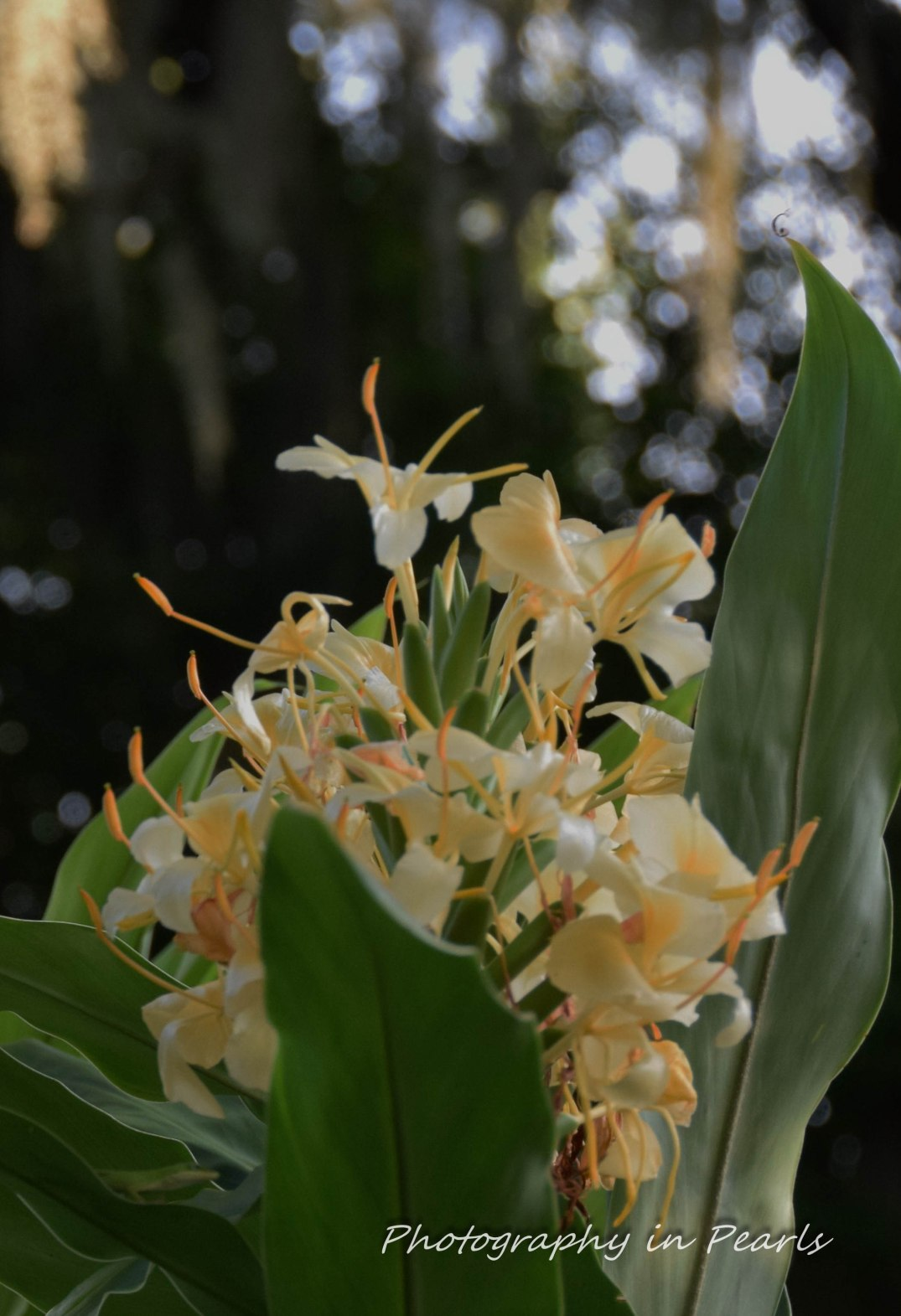 Flowers-2-3