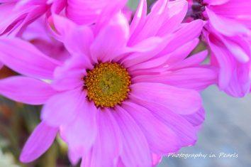 flowers-4-2
