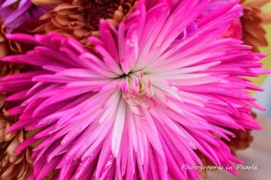 flowers-7-2