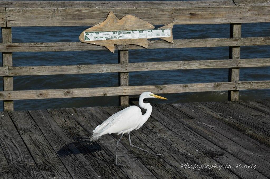 saltwater-fish-ruler