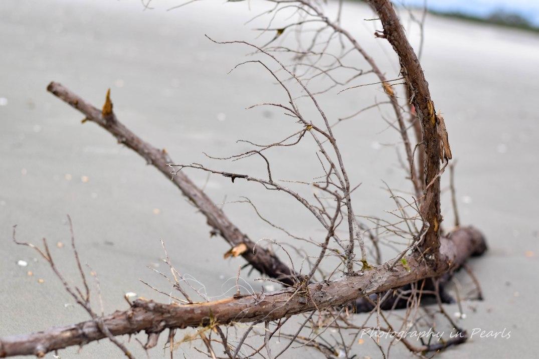 Forlorn Branch 3