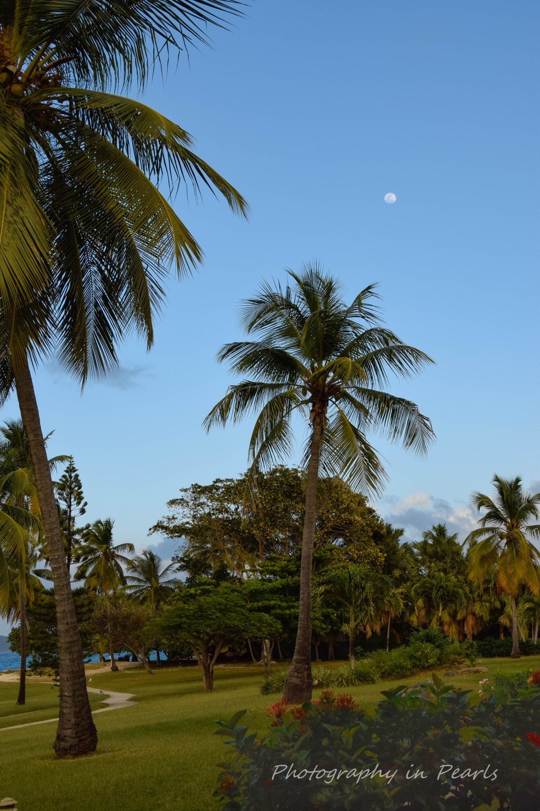 Moon Over the Palms - St Thomas USVI