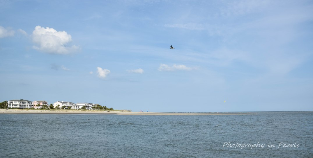 Gull Over Breach Inlet