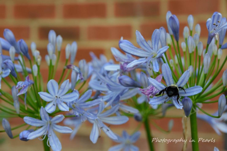 BeeHind in Blue