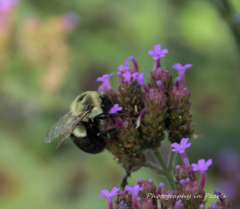 Golden Bee Wings