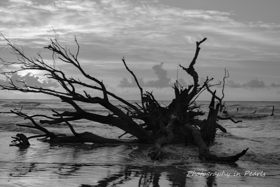 Boneyard Beach B&W