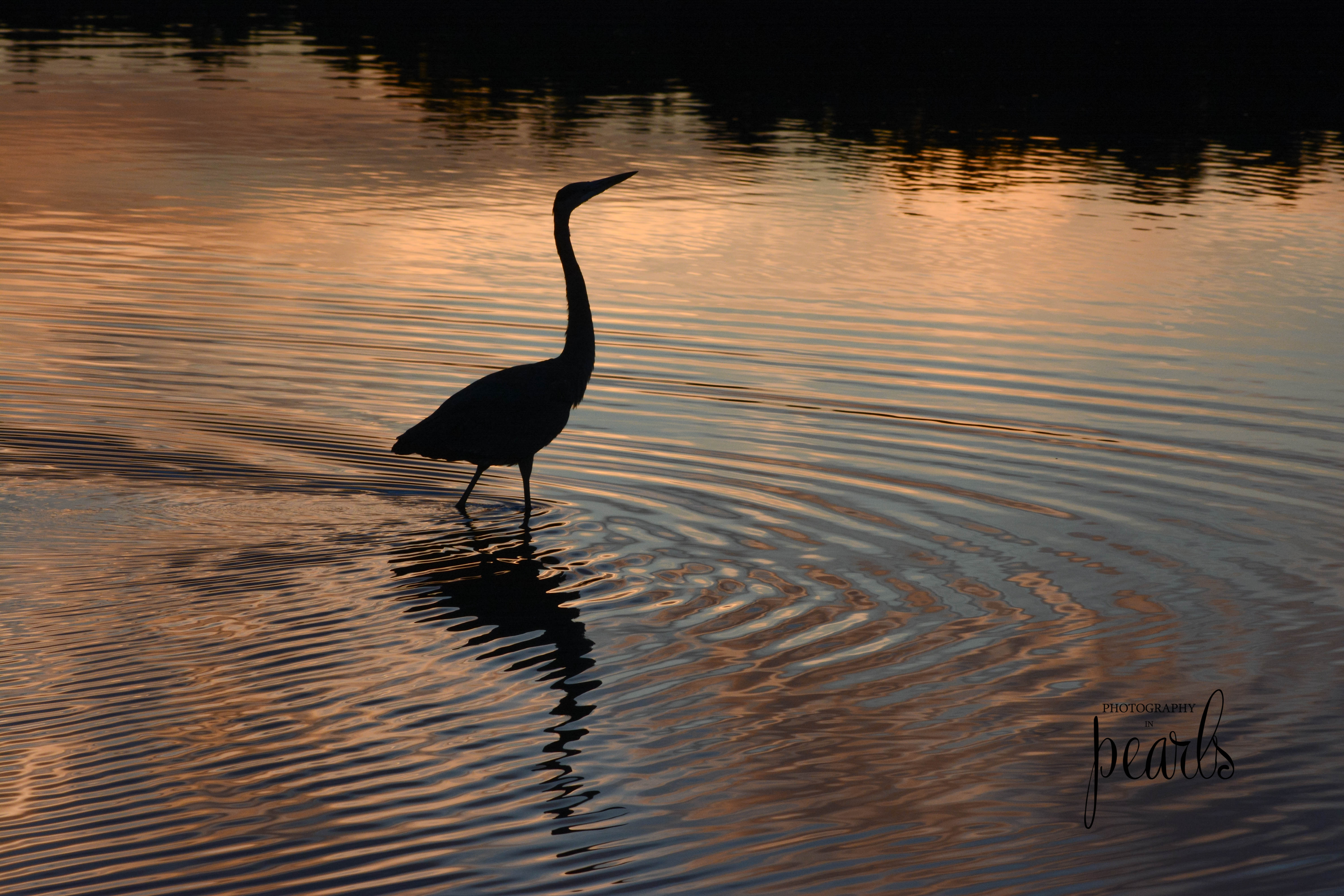Heron in Gold