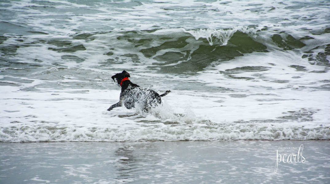 Dog in the Surf 3