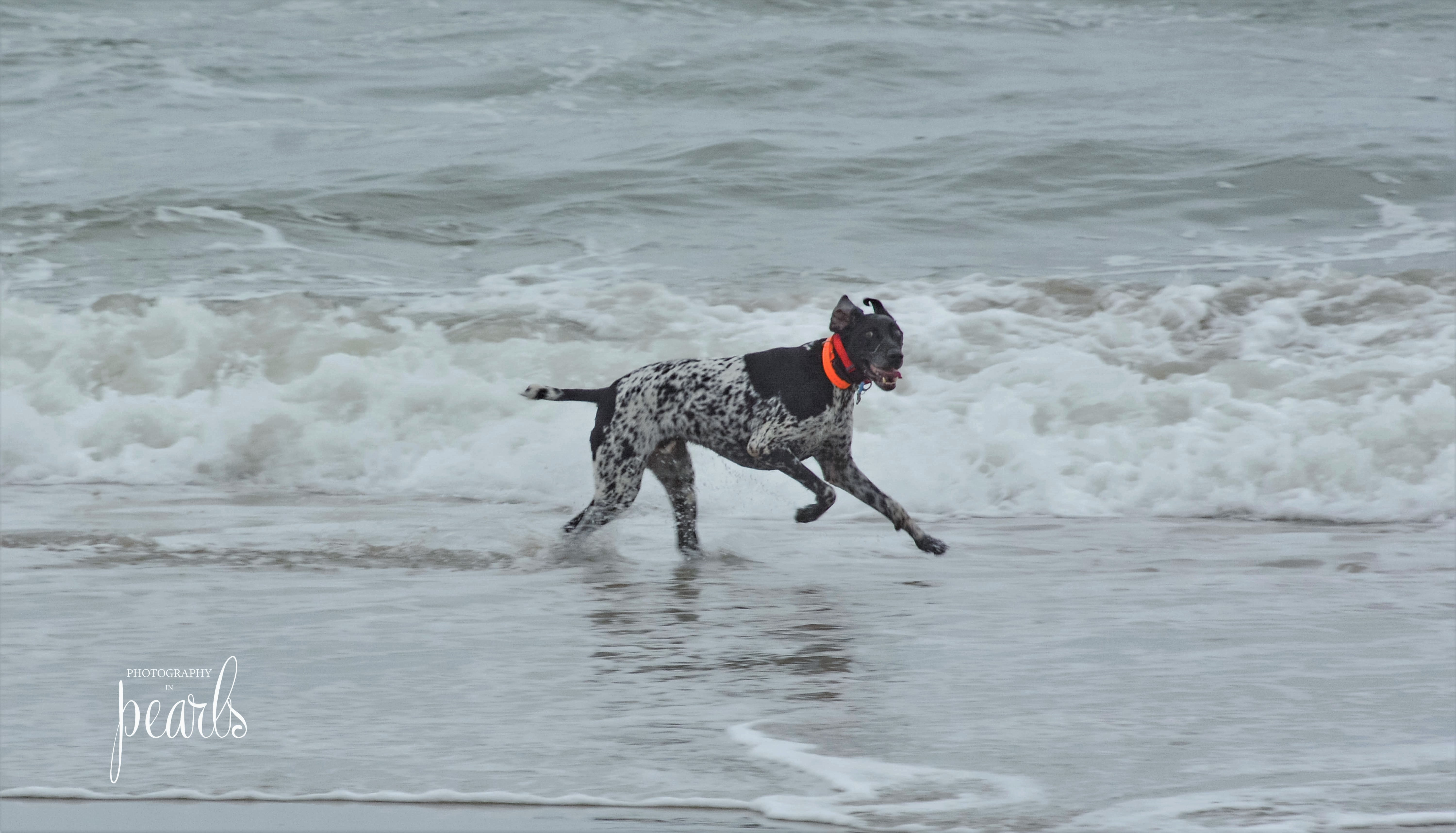 Dog in the Surf 5