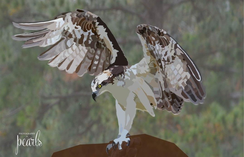 Osprey finished
