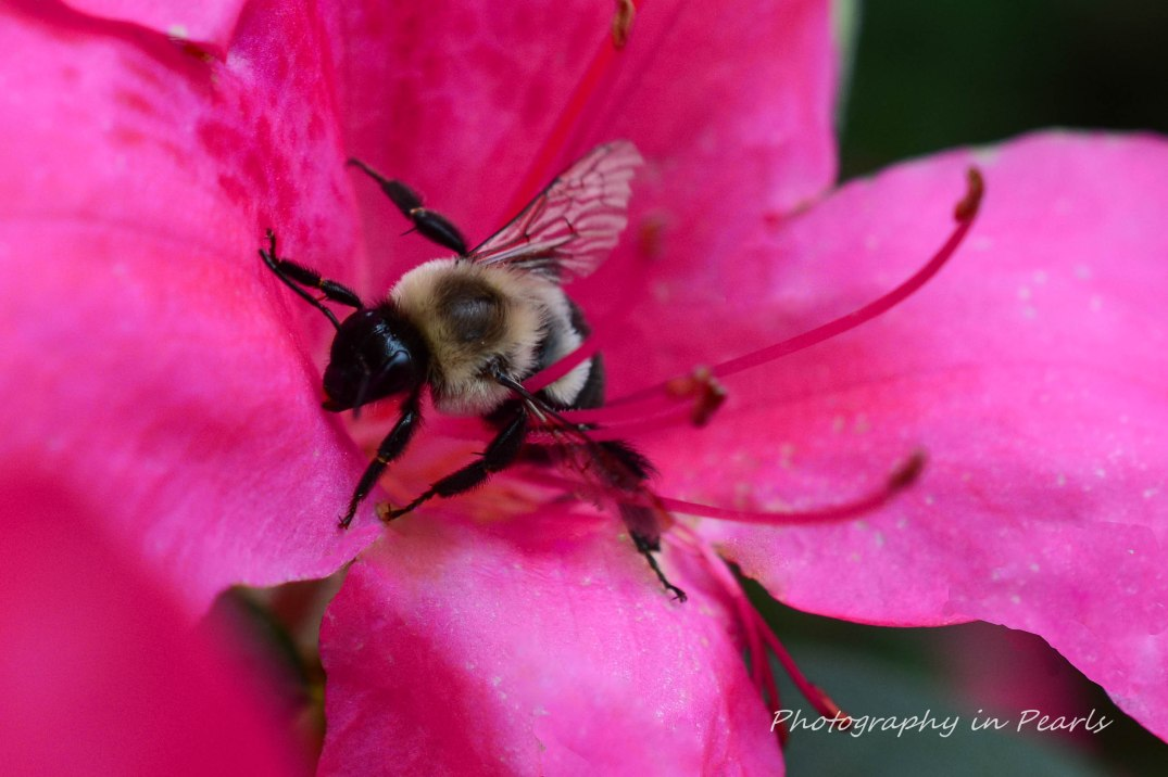 Bee Close Up
