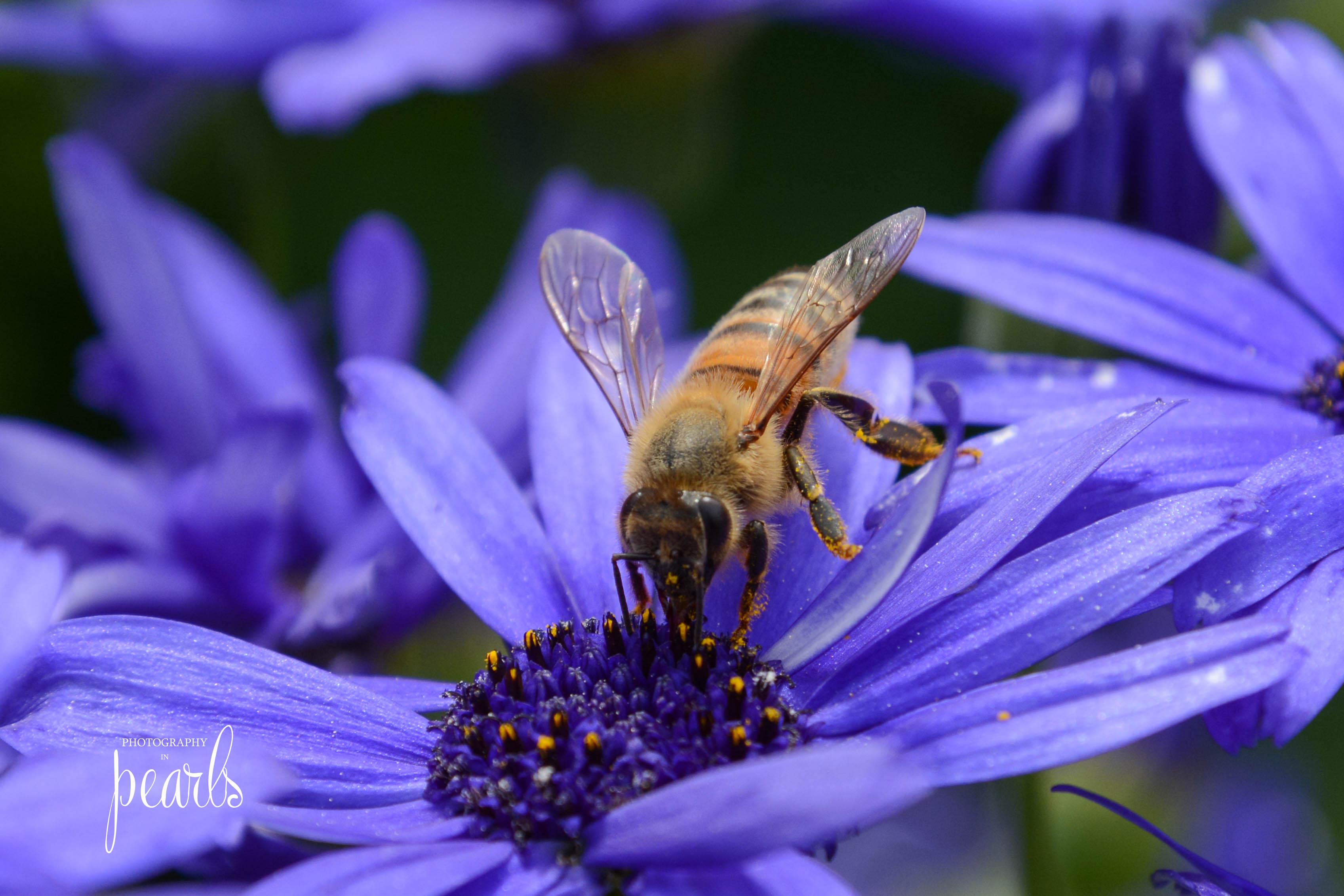 Bee on Blue 4