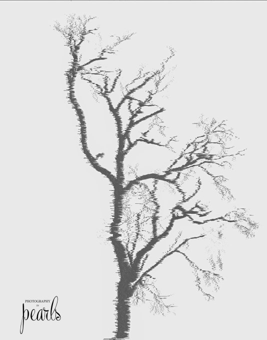 Bare Tree 3
