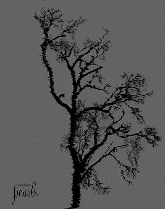 Bare Tree 4