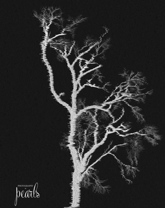 Bare Tree 5